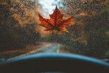 Sonbahar//Autumn