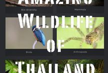 Thailand's Wildlife / The amazing, cryptic and rarely seen exotic wildlife of Thailand's national parks and sanctuaries.
