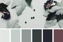 D_Color Schemes