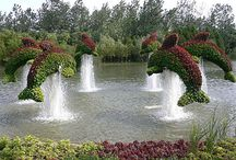 Inspiration topiary / A collection of Inspirational topiary, you can do whatever you please with your garden. / by Primrose