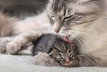 Comportement du Chat / Votre chat a des problèmes comportementaux ? Retrouvez ici de nombreux conseils pour une vie plus harmonieuse avec Minou !