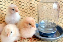 Chicks / by Patricia Hayes