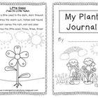 Planting in Kindergarten
