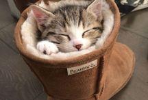 Cute Cats ❤