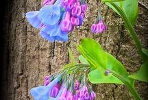 необычные цветы и растения