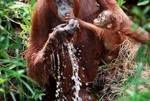 Apinat / serkkuja