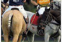 Poor horsemanship / Poor horsemanship