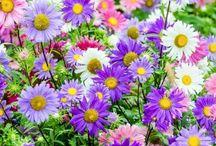 cimp floral