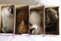 mačičky