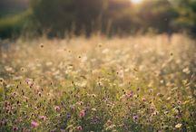 Fields & Meadows