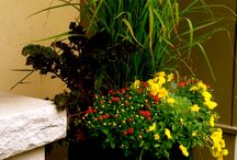 Garden Pots  / Beautiful garden pots by our fine gardening team at Southview Desgin