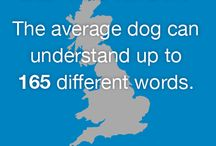 Factoids! / Unbelievable things you never knew about dogs!