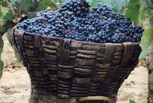 Bor  Wine  Vin Vino  Bино