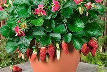 potted fruit garden