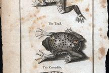 Frogs. Lizards.