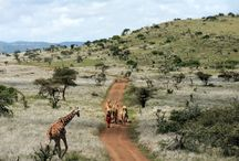 Kenya Family Safari – The Ultimate Family Holiday / Ker & Downey's Kenya Family Safari is the ideal family getaway in the African bush. It's an all-ages luxury adventure through some of the country's most memorable landscapes and game-rich areas.