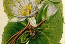 dibujos plantas