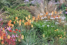 in the South African indigenous garden
