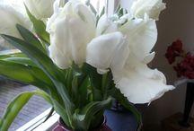 Bloemen / Kleurrijke bloemen