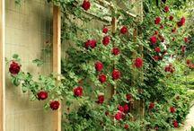Garden: lower 40 / by Amy Yates