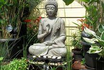 Aarti s garden