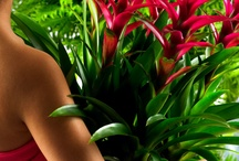 ✾Bromelia, designed by mother nature / Exuberantly designed with colourful 'feathers' and blazing trumpets. The type of plant you always want to feel, just to check it's not plastic. But no, it's an amazing creation of nature.