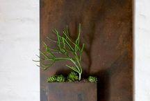 desert gardener / by renée hassan