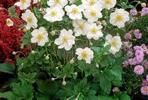 Tuinieren: herfstplanten / Favorieten, die bloeien in de late zomer en in de herfst