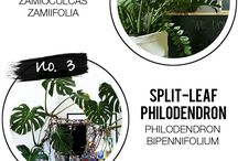 Plants / Plants, indoor plants, gardening,