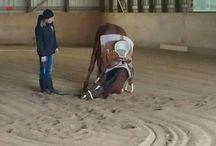 Bad horsie