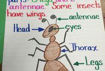 Tema insekter