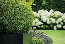 Topiary and shaped plants