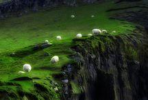 Sheep / Sheep from around the world