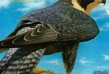 bird beutyful animal