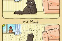Catsu the cat :-)
