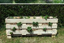 Green Living & Gardening
