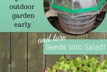 Garden! / Growing!