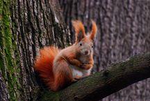 Zwierzęta / Zdjęcia zwierząt