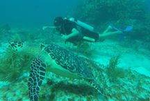 Cancun Diving / The best experience Diving in Cancun