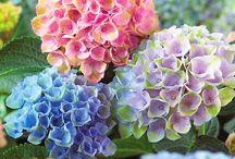H -- Flowers