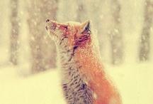 feeling foxy / by Laura Hamilton