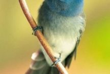 teneri uccellini