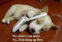 Cute Animals / Gotta have a collection of cute, cute animals. They always put a smile on my face!