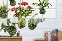 kokedama hanging gardens