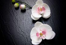 Mod orchidee