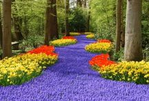 Great Gardens to Visit