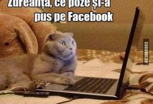 Pisici Amuzante