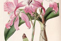 Botanical posters / .