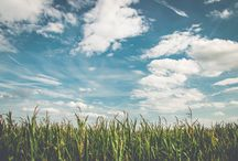 Corn Facts / Find information about the production and uses of Texas corn!
