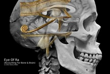 Pineal Gland - 3.tes Auge